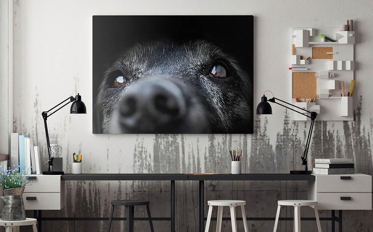 Obrazy ze zwierzętami, czyli natura pod Twoim dachem