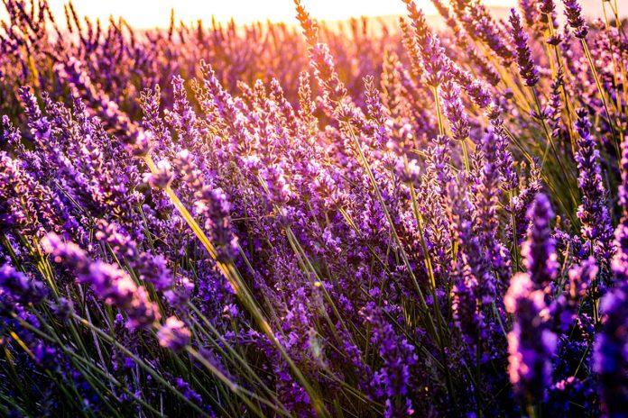 Wiosna w ogrodzie - aranżacja i pielęgnacja ogrodu